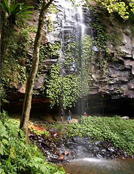 Crystal Shower Falls, Dorrigo, New South Wales